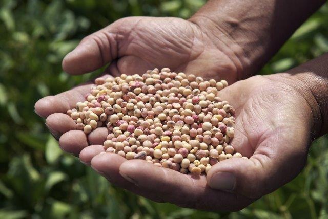 Novo recorde brasileiro na produção de grãos – 253,7 milhões de toneladas