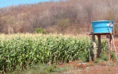 Agricultura irrigada em pequenas e médias propriedades