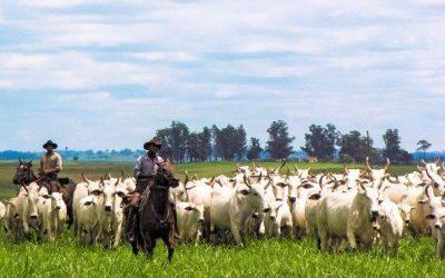 Pecuária legal, um movimento nacional