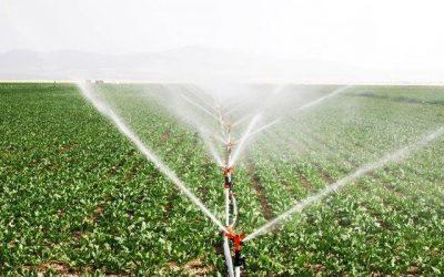A Irrigação e o sistema de gotejamento